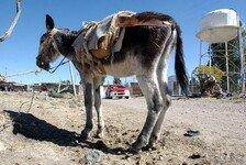 Formel 1 - Bilderserie: Donkey does: Ein Esel auf Weltreisen