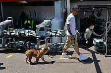 Formel 1 - Watson kritisiert Roscoe: Hamilton: F1-Fahrer oder Hip-Hop-Star?