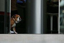 Formel 1 - Bilder: Monaco GP - Hamiltons Hund Roscoe
