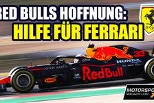 Formel 1 - Video: Red Bull hofft auf Motoren-Hilfe für Ferrari!
