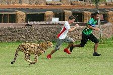 A1GP - Mann gegen Tier in Südafrika