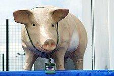 A1GP - Absage wegen Schweinegrippe
