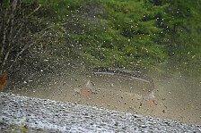 WRC - Bilder: Rallye Großbritannien - Tag 2