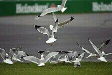 Formel 1 - Blog - Hamiltons Vogel-Attacke auf Vettel