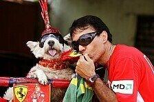 Nach Fan-Katze Schumi: Die verrückten Ferrari-Tiere