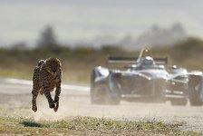 Formel-E-Auto vs. Gepard im Beschleunigungs-Duell