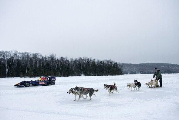 Red Bull Honigdachs gegen Schlittenhunde? - Foto: Red Bull