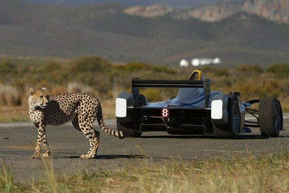Das Duell Formel E gegen Gepard war großes Spektakel samt Botschaft - Foto: Formula E