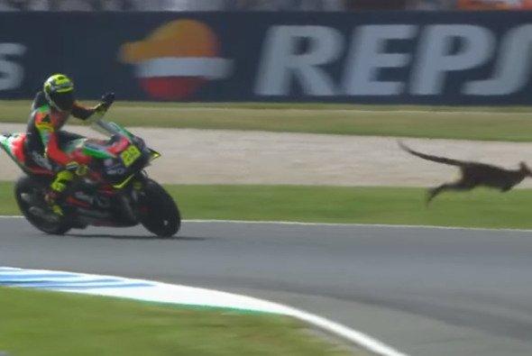 Andrea Iannone und seine Begegnung mit dem Känguru - Foto: MotoGP/Screenshot